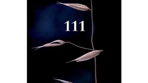 """APRESENTAÇÃO DO LIVRO """"111"""""""