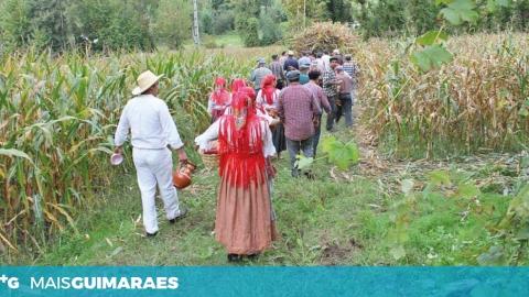FESTA DAS COLHEITAS ANIMA A VILA DE S. TORCATO NO FIM DE SEMANA