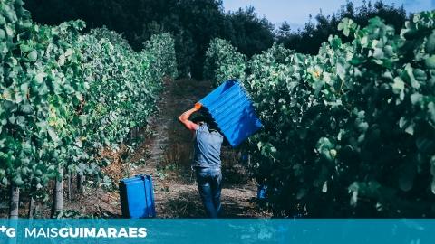 MERCADO INTERNACIONAL CADA VEZ MAIS ALICIANTE PARA PRODUTORES DE VINHO