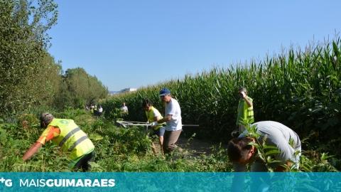 REMOVIDAS ESPÉCIES INVASORAS NA RIBEIRA DA CANHOTA