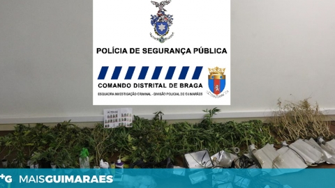 "PSP DETÉM INDIVÍDUO POR TRÁFICO DE DROGA E APREENDE ""131 PÉS DE CANNABIS"""