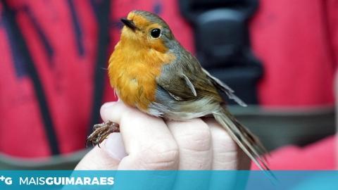 Esta iniciativa quer pôr os vimaranenses a fotografar o património natural do concelho