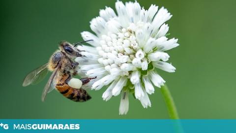 Um desafio para conhecermos melhor os polinizadores que visitam as nossas flores